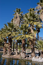 Encanto Park. Phoenix, Arizona, USA. - Photo #5444