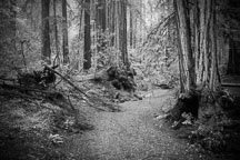 Path through the forest. Armstrong Redwoods State Natural Reserve. - Photo #32044
