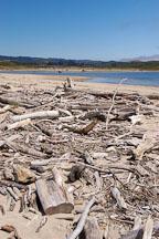 Driftwood at Pescadero state beach, California, USA. - Photo #4345