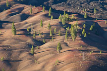 Pine trees on the Painted Dunes. Lassen NP, California. - Photo #27145