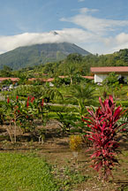 Arenal Volcano. Alajuela, Costa Rica. - Photo #14145