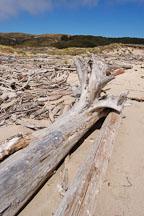 Driftwood at Pescadero state beach, California, USA. - Photo #4346
