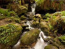 Trillium Falls. Redwood National Park, California. - Photo #28846