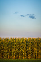Corn field near Nevada Iowa. - Photo #33047