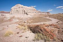 Petrified log and badland hill. Long Logs Trail, Petrified Forest NP, Arizona. - Photo #17949