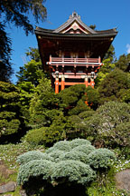 Pagoda in the Japanese Tea Garden. Golden Gate Park, San Francisco, California, USA. - Photo #3458