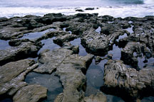 Tidepools. Natural Bridges State Beach, California. - Photo #905