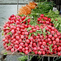 Beets at the farmers' market. Union Square, New York City, New York, USA. - Photo #13150
