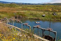 Flood control gates at Pescadero march, California, USA. - Photo #4352