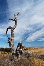 Arastradero preserve. Palo Alto, California, USA. - Photo #4553