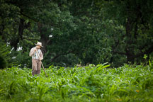 Man tending crops at the pioneer farm. - Photo #32953