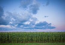 Rows of corn. Nevada, Iowa. - Photo #33053