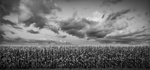 Clouds over corn field. Nevada, Iowa. - Photo #33054