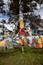 Prayer flags. Dochu La, Bhutan. - Photo #23154