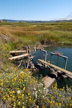 Pescadero marsh. California, USA. - Photo #4354