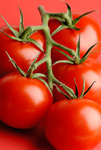 Red tomatoes - Photo #13855