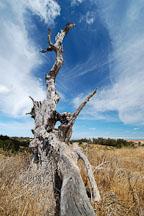 Arastradero preserve. Palo Alto, California, USA. - Photo #4556
