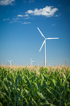 Wind turbine in corn field. Colo, Iowa. - Photo #33056