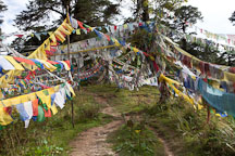 Path leading through prayer flags at Dochu La, Bhutan. - Photo #23158