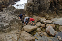 Children investigating tide pools. 17-Mile drive, California, USA. - Photo #4783