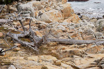 Rocky shoreline, 17-Mile drive, California, USA. - Photo #4818