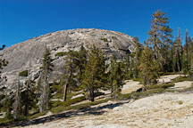 Pictures of Sentinel Dome and the Jeffrey Pine