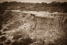 Eroding hillside. Torrey Pines State Reserve. San Diego, California. - Photo #26206