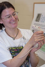 A volunteer holds up an adoptable rat. The Wonderful World of Rats, San Mateo, California, USA. - Photo #6006