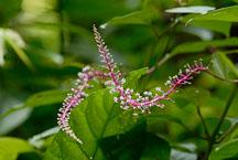 Cloudforrest flower. - Photo #14161