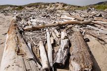 Driftwood at Pescadero state beach, California, USA. - Photo #4363
