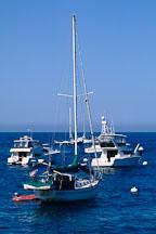 Boats. Avalon, Catalina Island, California. - Photo #565