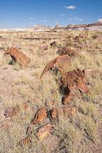 Petrified tree broken into multiple blocks. Petrified Forest NP, Arizona. - Photo #17965