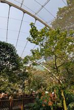 Edward Youde Aviary. Hong Kong, China. - Photo #16466