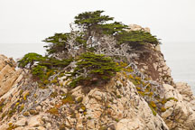 Cypress trees on rocky shoreline. Point Lobos, California. - Photo #26968
