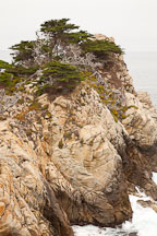 Coastal cypress trees at Point Lobos. - Photo #26969