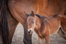Foal standing near its mother. ISU horse barn. - Photo #32370