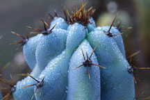 Unidentified cactus. - Photo #670