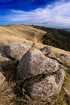 Russian Ridge Open Space Preserve. California. - Photo #3371