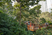 Elevated walkway in the Edward Youde Aviary. Hong Kong, China. - Photo #16475