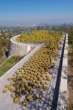 Cactus garden, Getty Center. Los Angeles, California, USA. - Photo #8176