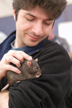 Holding a pet rat. The Wonderful World of Rats, San Mateo, California, USA. - Photo #6076