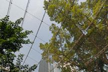 Stainless steel mesh enclosing the Edward Youde Aviary. Hong Kong, China. - Photo #16477