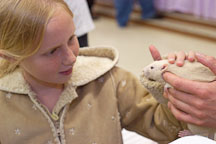 A young girl pets a rat. The Wonderful World of Rats, San Mateo, California, USA. - Photo #6007