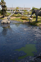 La Brea tar pits. Los Angeles, California, USA. - Photo #6636