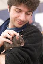 Holding a pet rat. The Wonderful World of Rats, San Mateo, California, USA. - Photo #6076