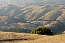Rolling hills at Mission Peak, Fremont, California, USA. - Photo #6306