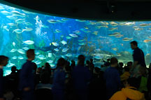 Melbourne aquarium. Melbourne, Australia. - Photo #1708