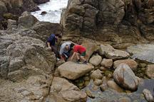 Children investigating tide pools. 17-Mile drive, California, USA. - Photo #4783