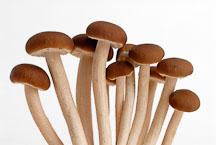 Velvet Pioppino mushroom - Photo #13883