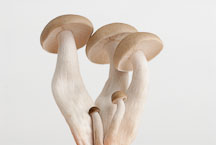 Brown clamshell mushroom - Photo #13884